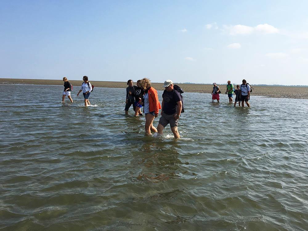 Wattwanderer laufen durch das knapp kniehohe Wasser auf ihrer Wattwanderung zur Insel Baltrum